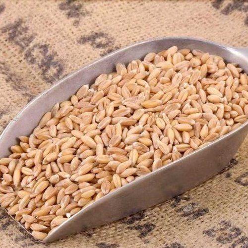 Organic Spelt Grain