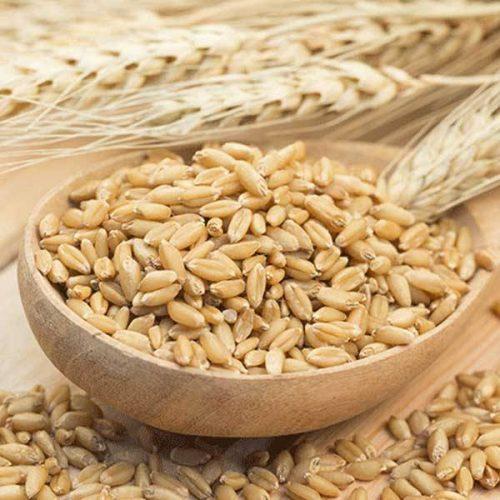 Organic Barley Grain 1kg